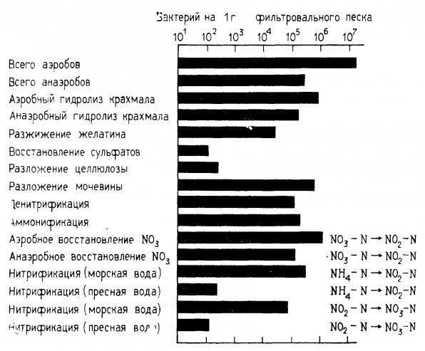 Численность бактерий фильтрационного слоя в малых пресноводных и морских аквариумных системах через 134 дня