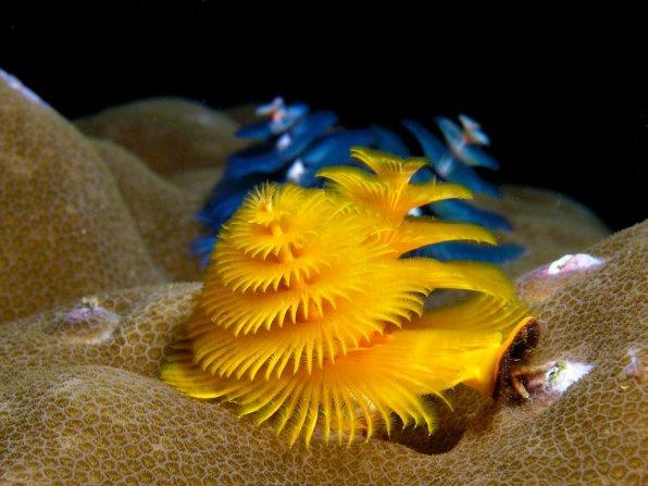 Новогодняя елочка аквариумиста!