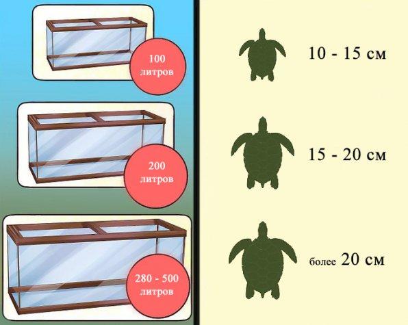 Красноухая черепаха объем аквариума фото
