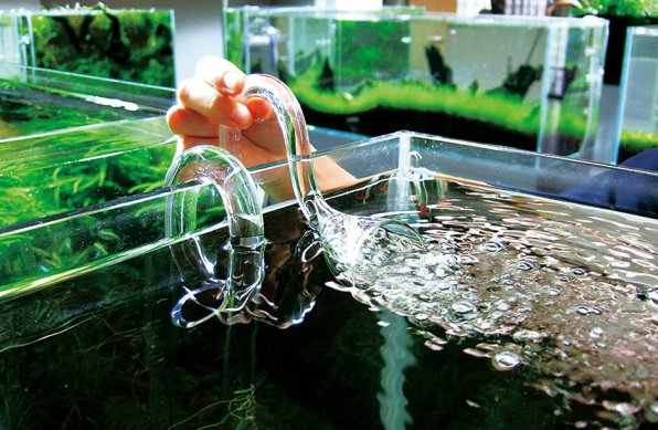 лилипайп для аквариума