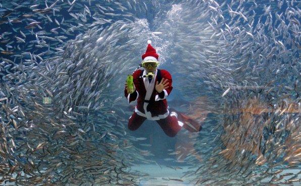 Новогодний аквариум