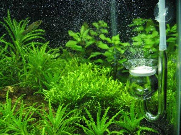 Инвентарь и приспособления для чистки аквариума!