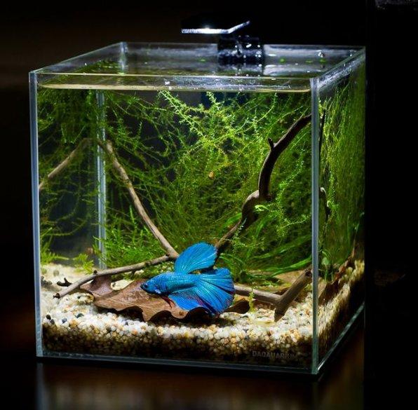 Обогреватели для маленьких аквариумов