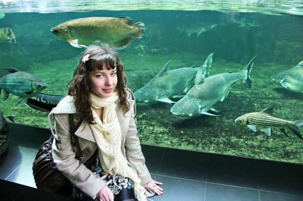 Акулий сом пангасиус в аквариуме