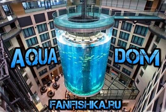 Супер-мега аквариум Берлина AquaDom