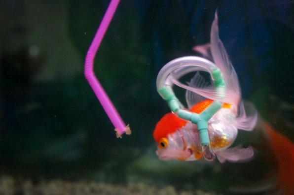 Эйнштейн жив - рассказ о спасении золотой рыбки!!!