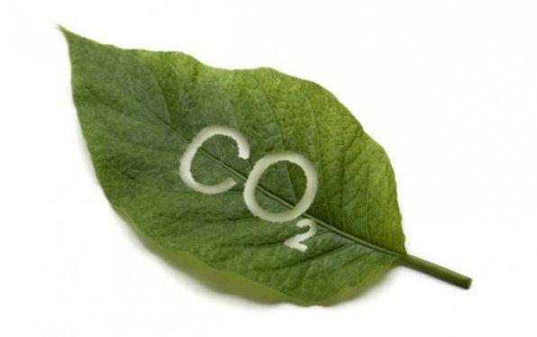 углекислый газ растения