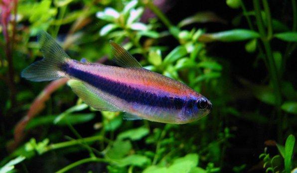 Фиолетовый неон керри фото