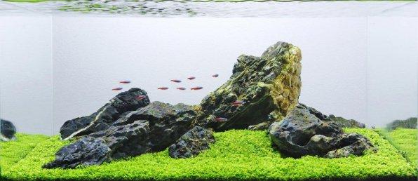 Ивагуми аквариум классика