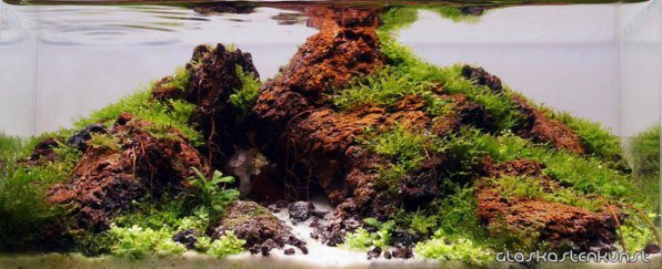 Маленький аквариум два 2 литра IAPLC