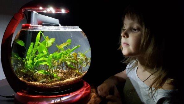 Маленький круглый, но такой милый аквариум!