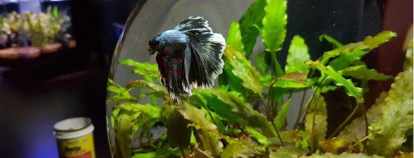 Маленький круглый аквариум каскад глоуб