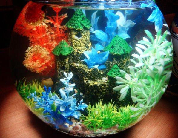 оформление маленького круглого аквариума