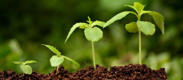Стимуляторы роста аквариумных растений: разговор на чистоту!