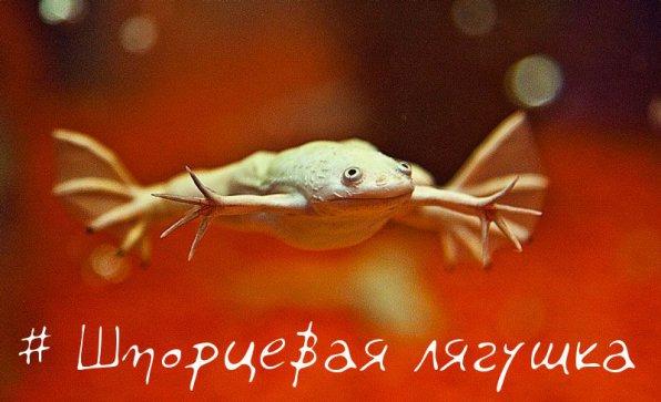 красивое фото лягушки