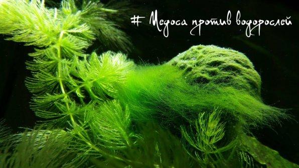 Медоса Vladox против водорослей