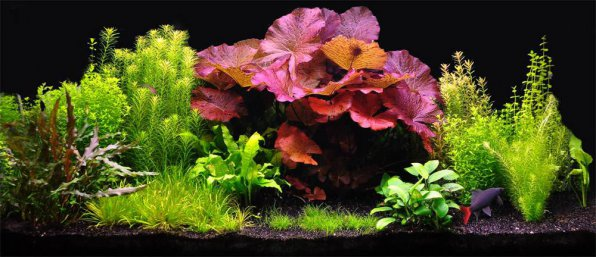 Совместимость аквариумных растений фото