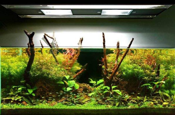Свет для аквариума с растениями