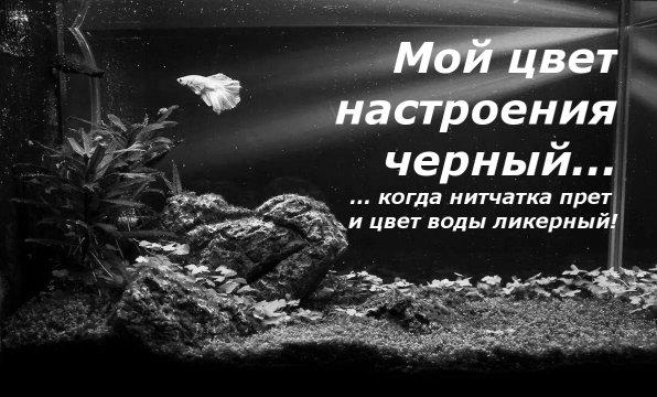 Мой цвет настроения черный когда аквариуме нитчатка https://fanfishka.ru