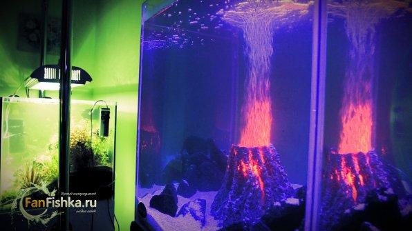 Нано аквариум оформление