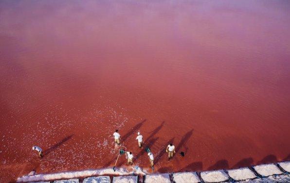Розовый водоем с артемией