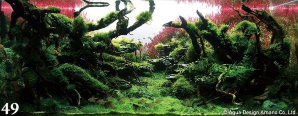 Красные растения в аквариуме