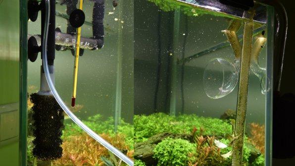 Выходы из внешних аквариумных фильтров: лилик и флейта