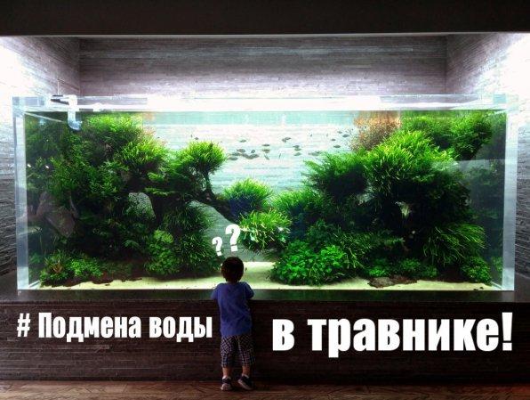 Смена воды в аквариуме с растениями