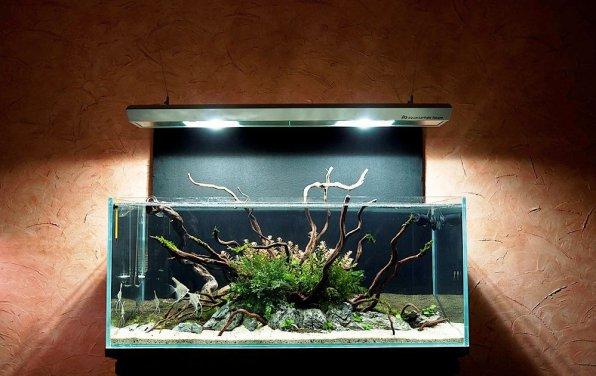 Смена воды в аквариуме травнике