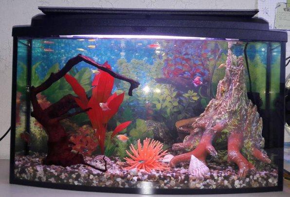 Первый общий аквариум начинающего
