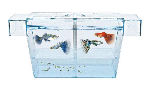 Нерестовик для живородящих рыбок