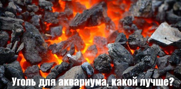 Уголь для аквариума, какой лучше?