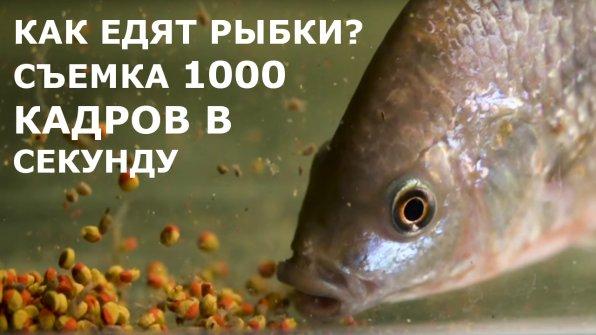 Как питаются рыбки