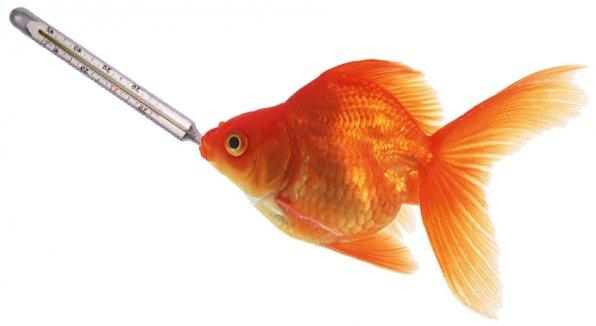 Как лечить рыбок расширенный инструктаж