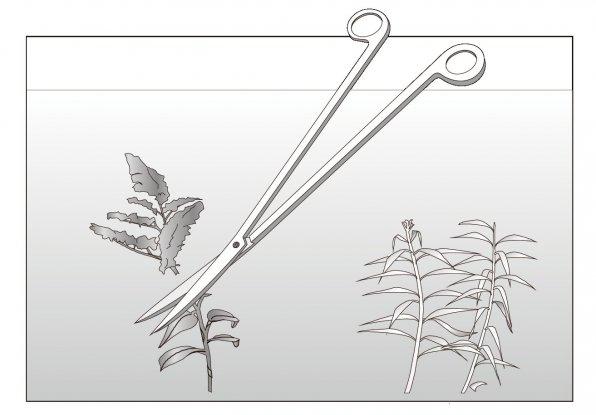 Пинцеты и ножницы для аквариума, какие выбрать?