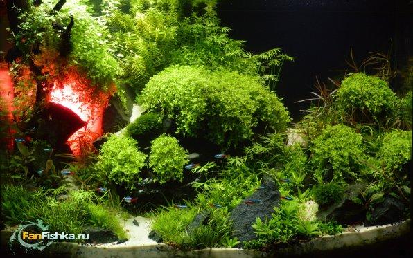 Акваскейп: там где живет красный дракон