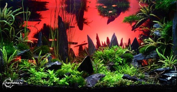 Акваскейп: логово химеры