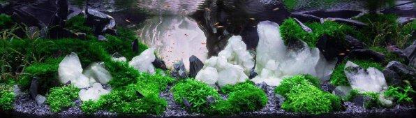 Косячные акваскейпы