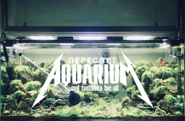 Пересвет в аквариуме