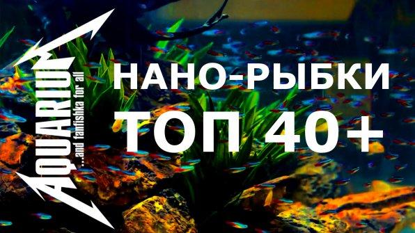 Нано-рыбки ТОП 40+