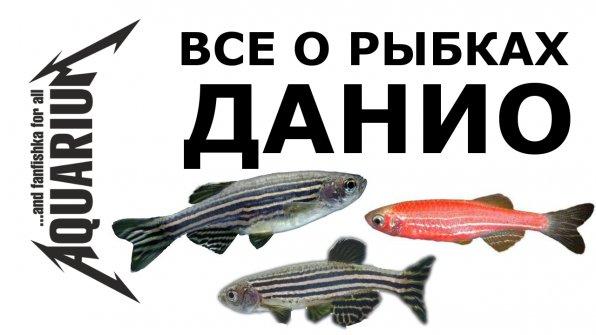 Рыбки данио видео-обзор