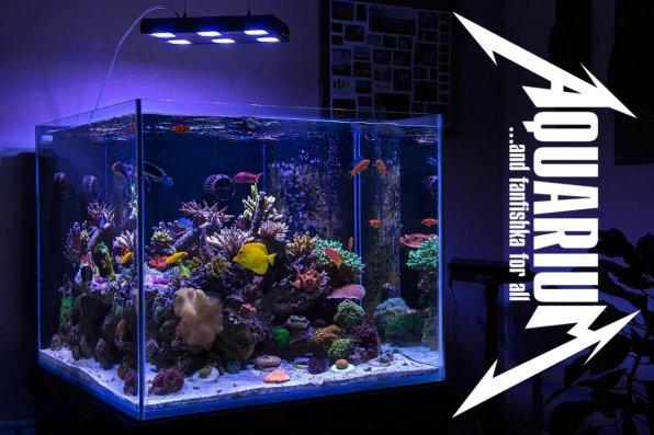 Морской аквариум для начинающих видео-курс