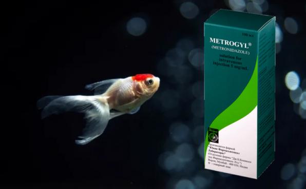 Метрогилдля лечения аквариумных рыбок