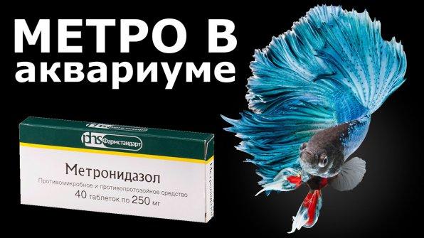 Метронидазол (трихопол)для лечения аквариумных рыбок