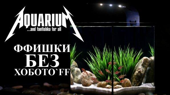 Неприхотливые аквариумные рыбки