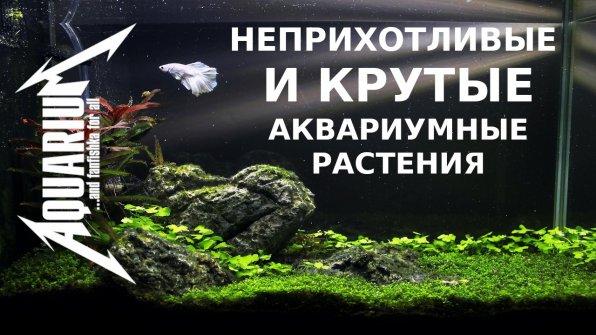 Неприхотливые аквариумные растения для начинающих