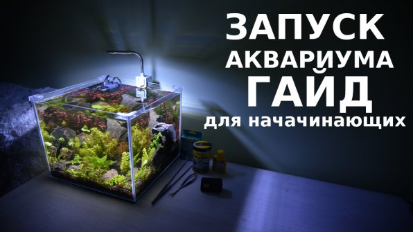 Запуск аквариума видео-гайд для начинающих