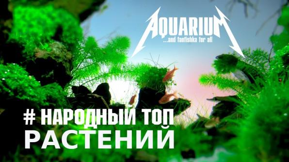 Народный ТОП аквариумных растений для начинающих