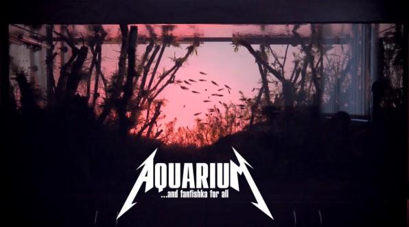 Красивый аквариум на 500 литров с родостомусами!