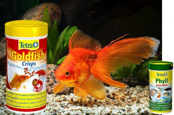 Корм для золотых рыбок